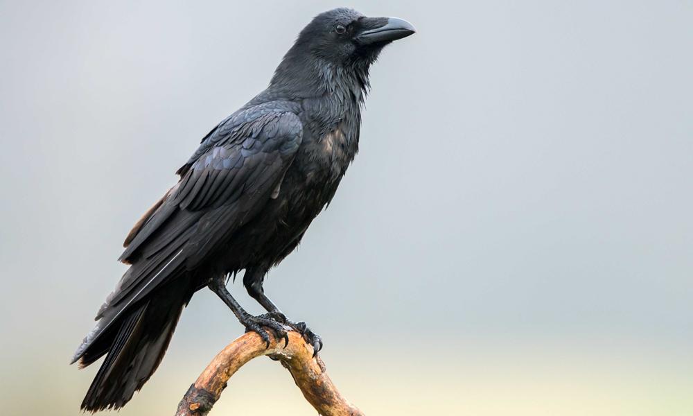 National Bird