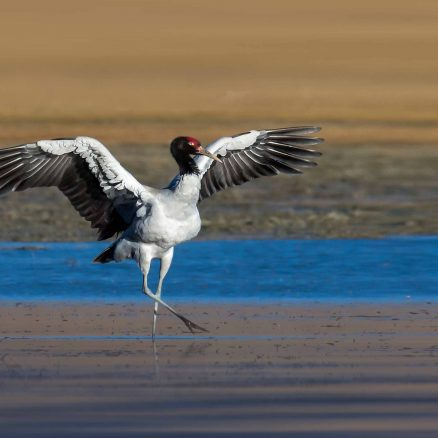 6 Nights 7 Days – Black Necked Crane Festival Journey