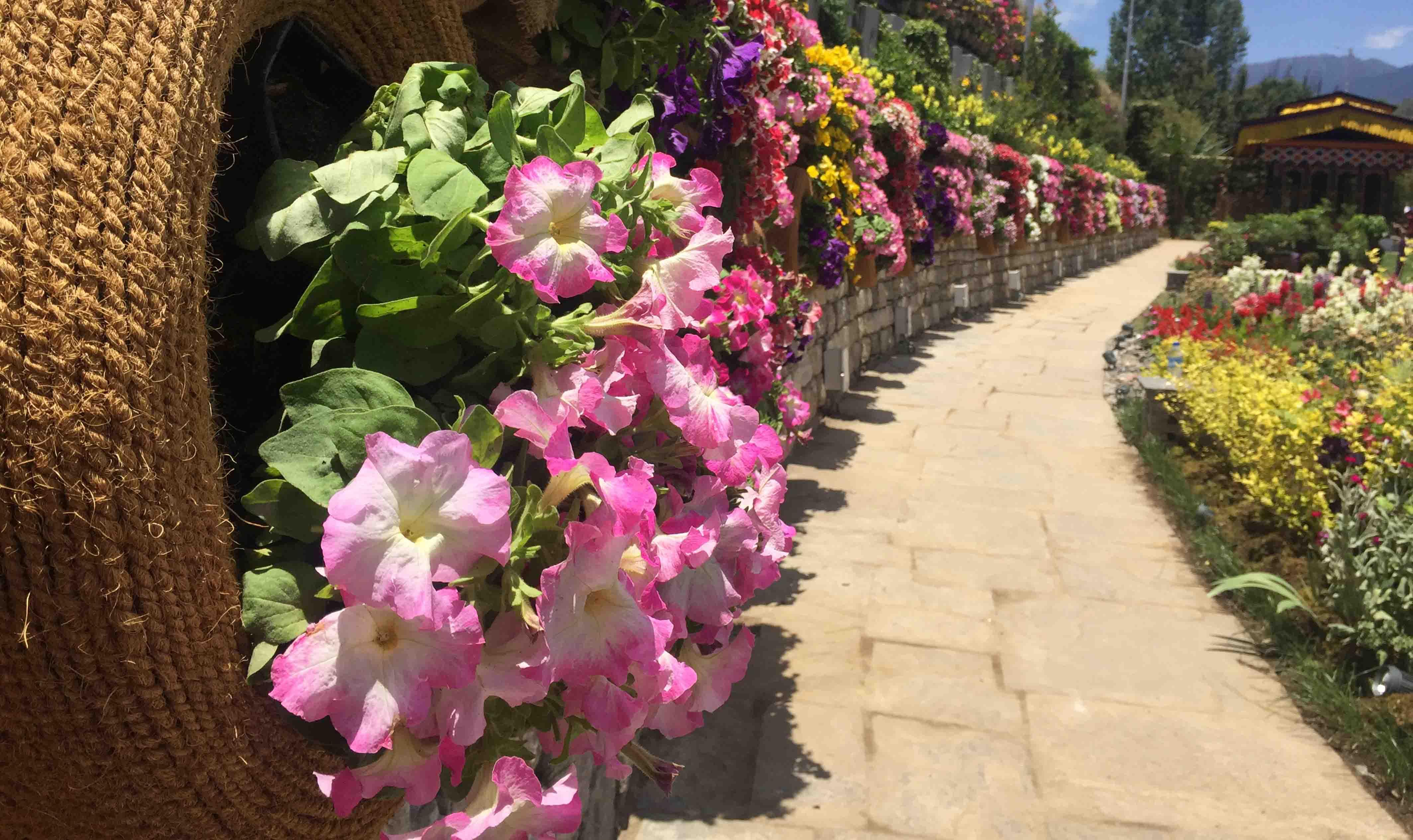 Royal Bhutan Flower Exhibition – 21 February, 2019