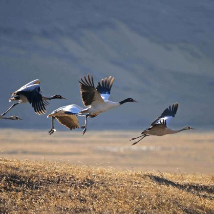 6 Nights 7 Days Black Necked Crane Festival